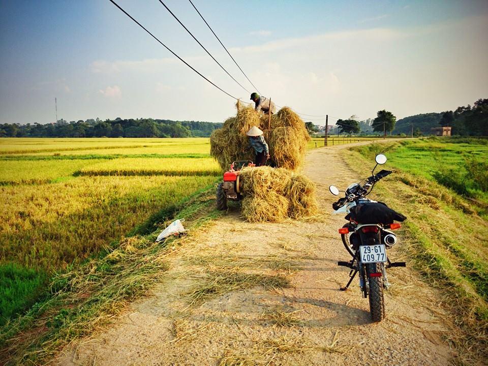 Vietnamese countryside in harvest season