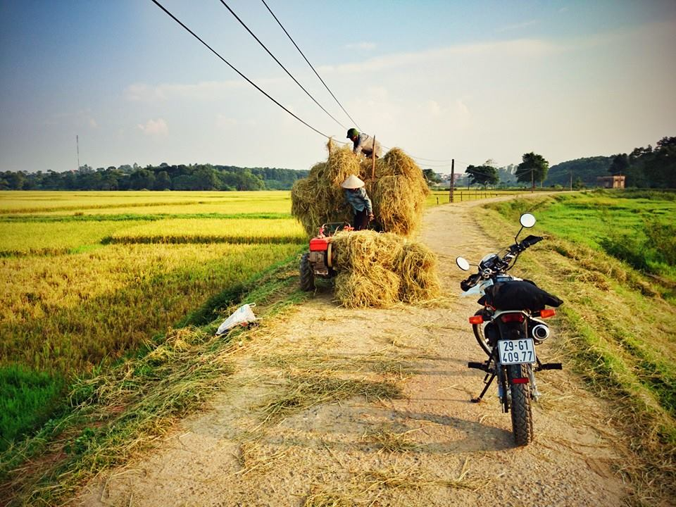 Vietnamese countryside in harvest season