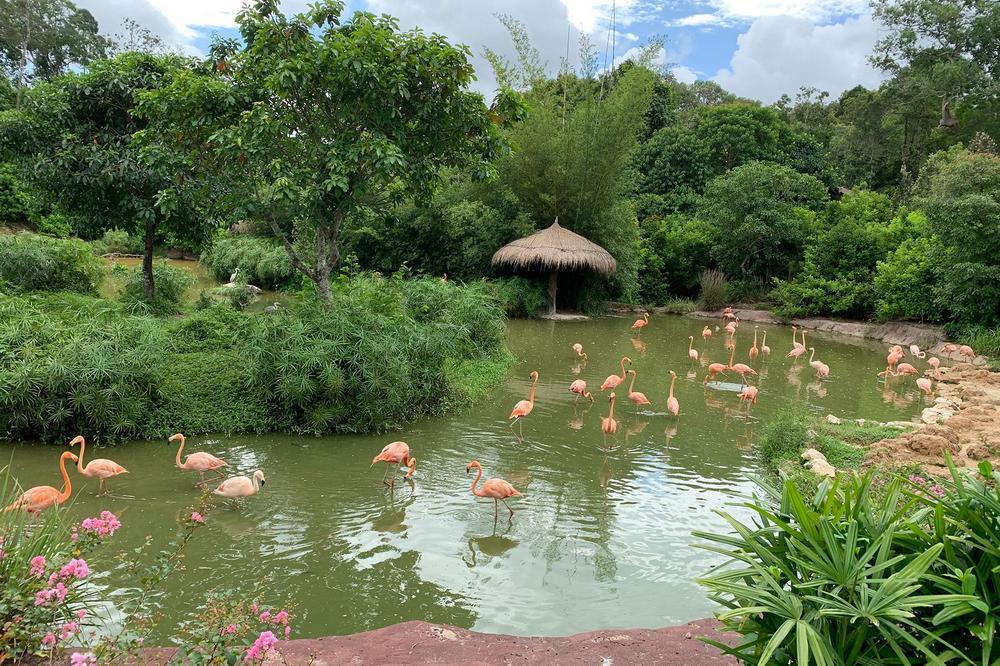Flamingos attract visitors right at the entrance to Safari