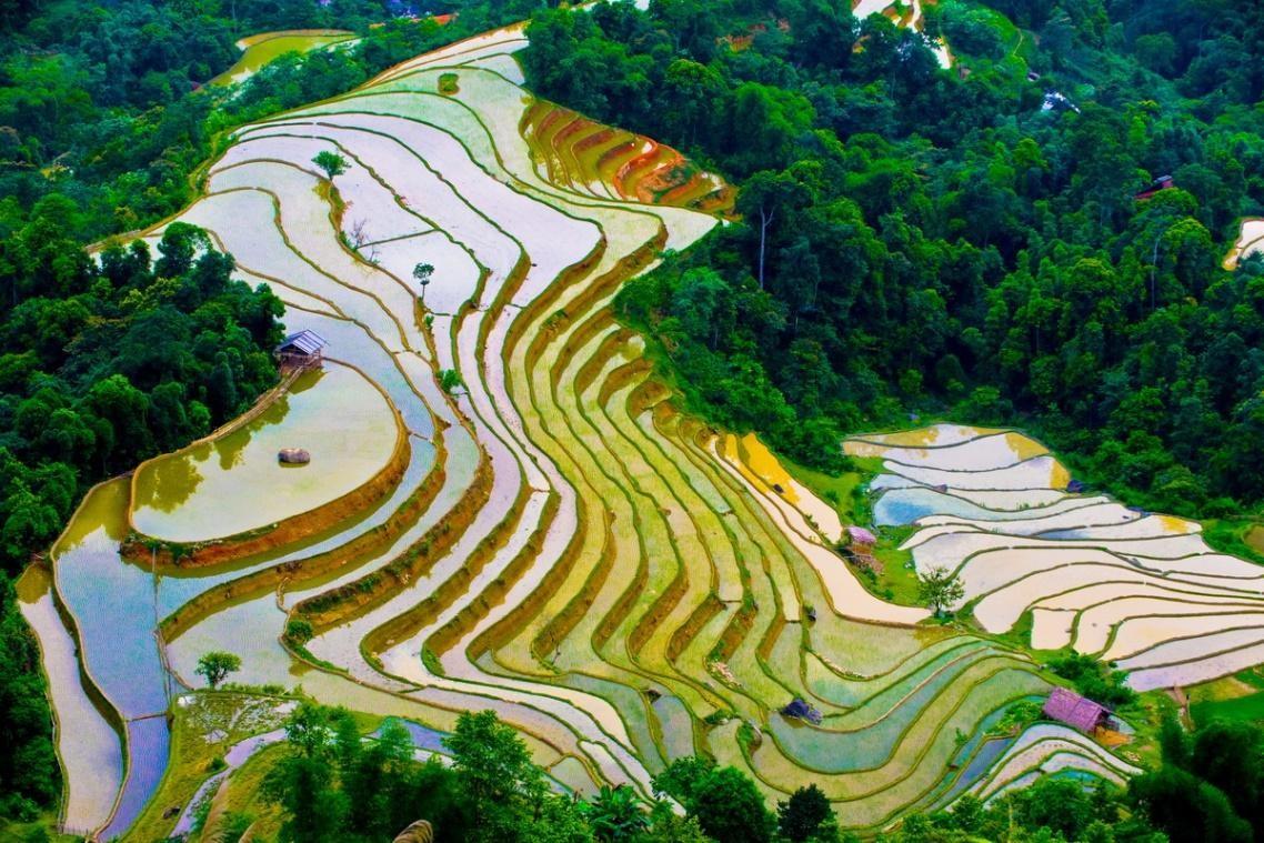 Terraced fields in Sapa